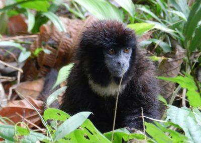 Monkey, Cuyabeno, Ecuador