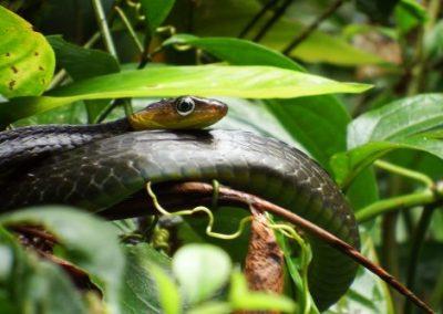 Snake, Cuyabeno, Ecuador