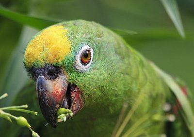 Bird, Cuyabeno