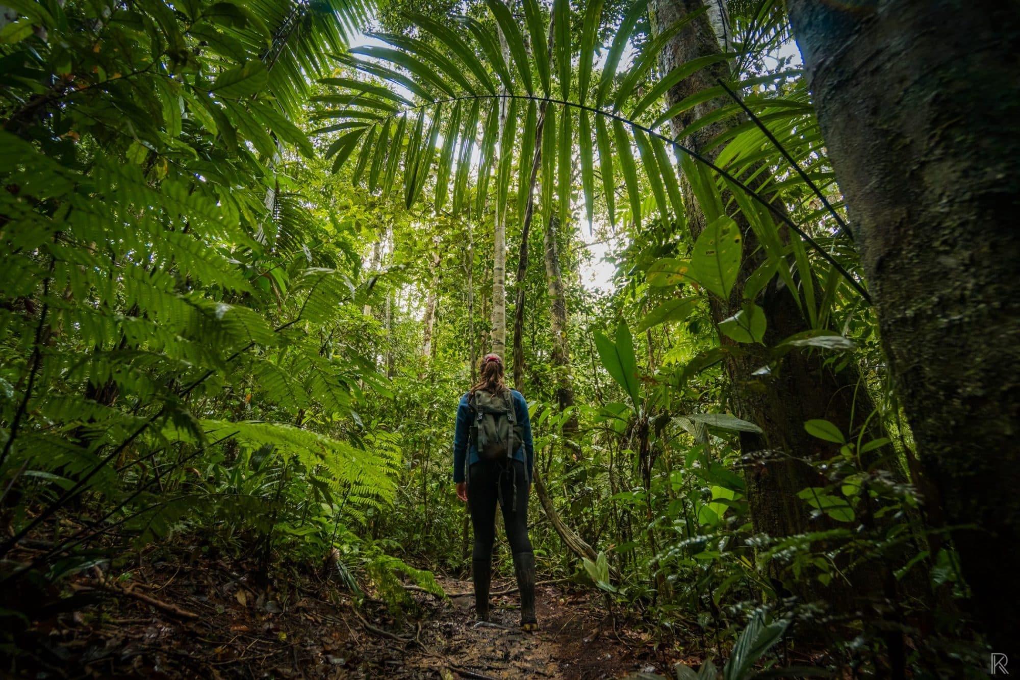 Amazonaswanderung, Bamboo Lodge, Cuyabeno