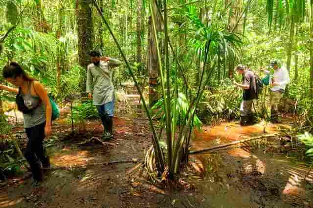 jungle hike cuyabeno